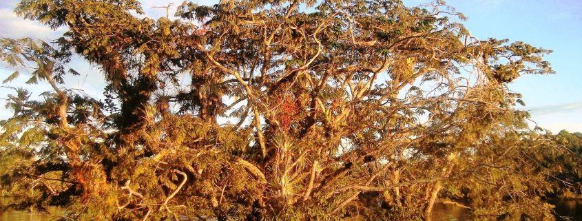 la maestosità della natura in Amazzonia