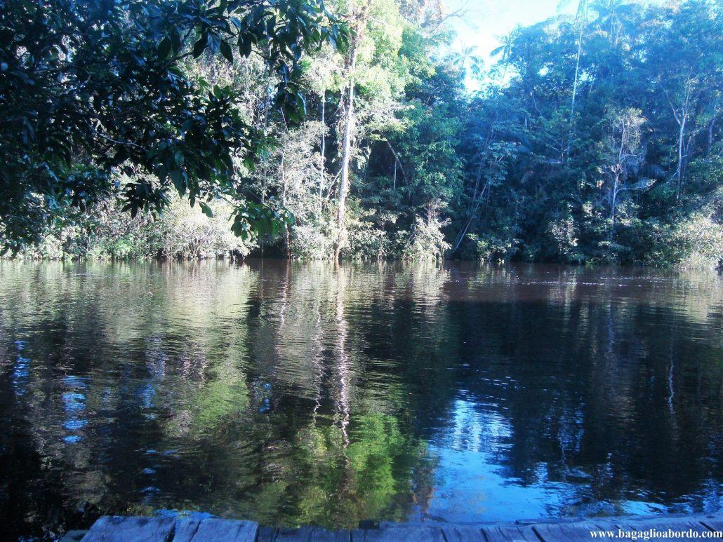 seduta sul molo ascolto la giungla
