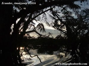 esplorazioni notturne nella foresta amazzonica