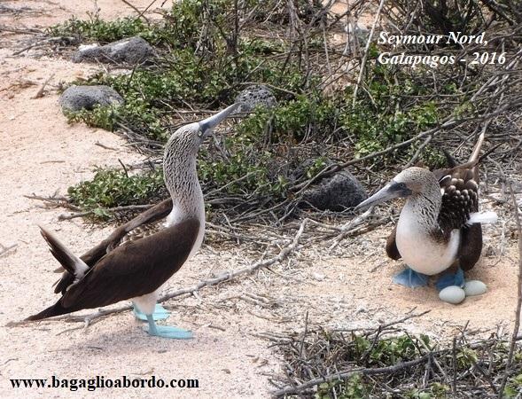 i meravigliosi uccelli delle isole Galapagos