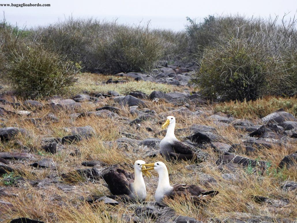 dove comprare una crociera per vedere gli animali delle isole Galapagos