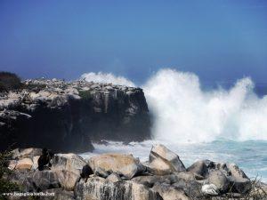 Galapagos, la perfezione della Natura
