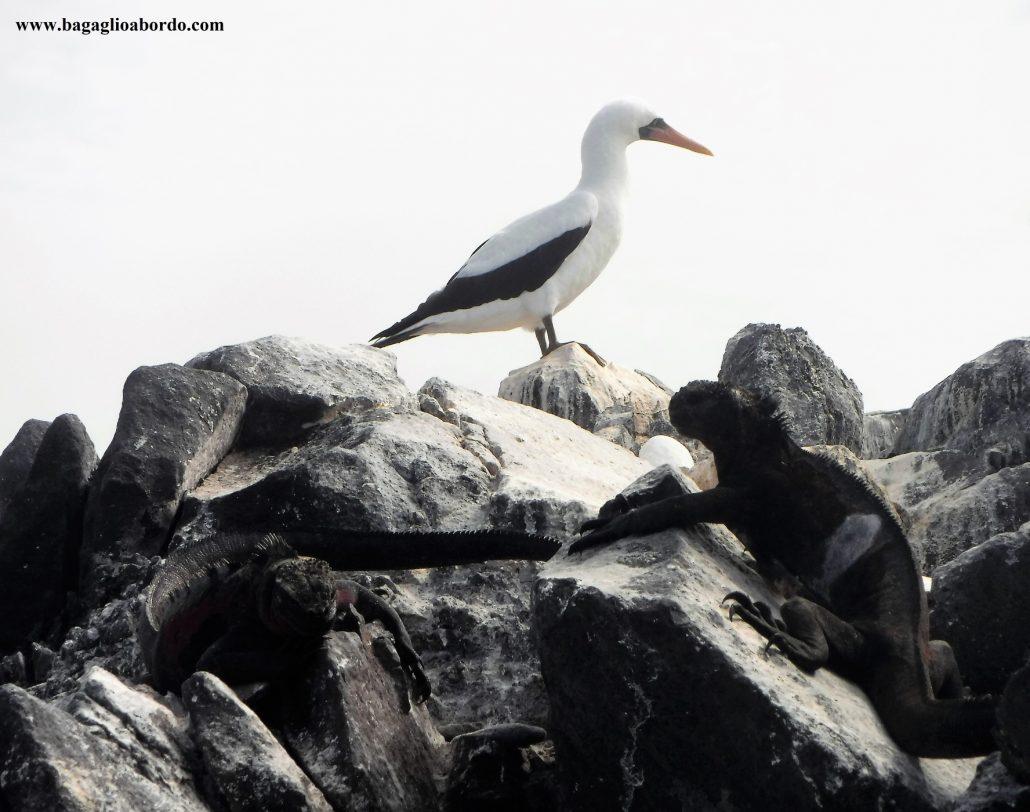 come spendere di meno in una crociera nelle isole Galapagos
