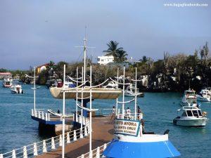 nell'isola di Santa Cruz, vive la maggior parte della popolazione umana delle Galapagos. qui si concentrano anche tutte le attività economiche
