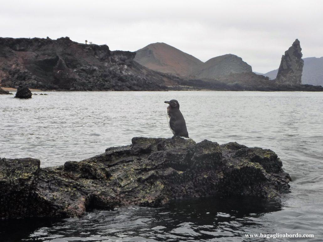 le isole Galapgos sono uniche