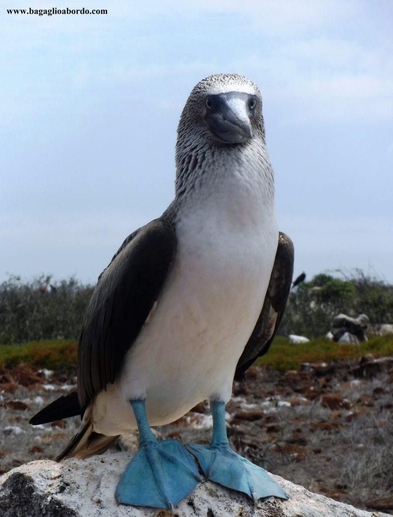gli incredibili animali delle Galapagos