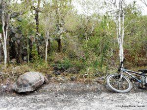 incontri in bicicletta sull'isola di Isabela