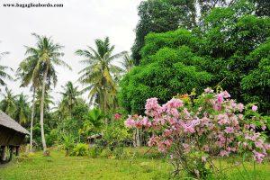 la casa di Roland, l'uomo che salva le tartarughe nei pressi di Tip of Borneo, in Malesia