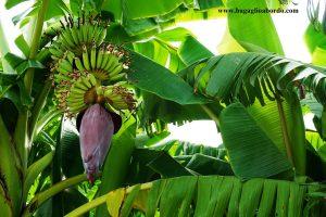 alberi da frutto buoni e belli