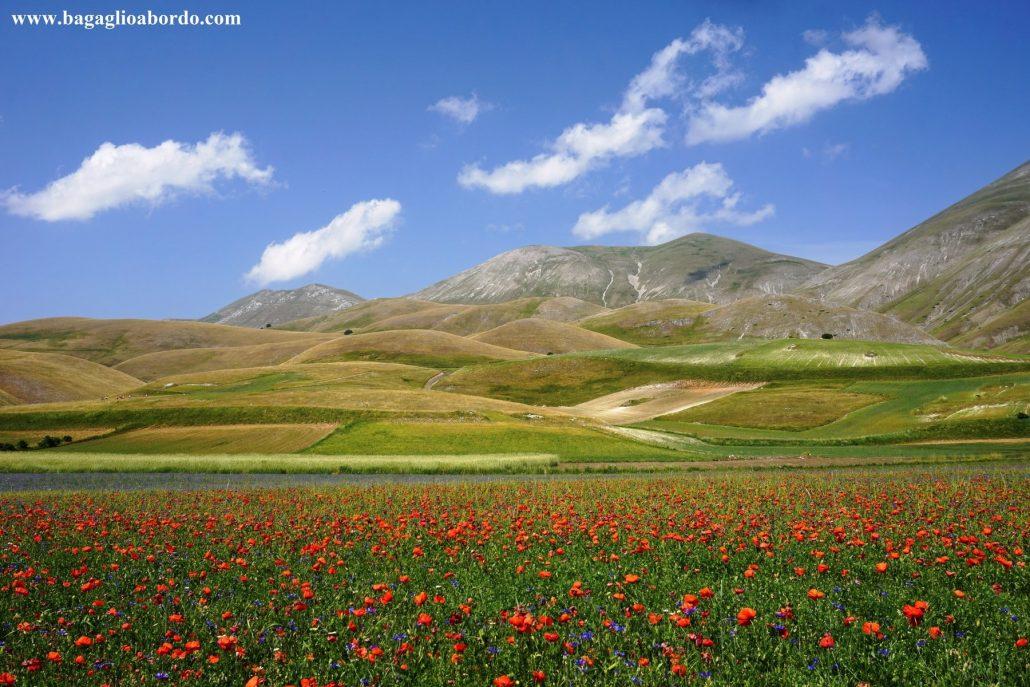 migliaia e migliaia di fiori
