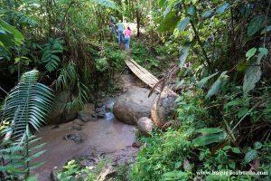 tour per vedere la Rafflesia in Malaysia