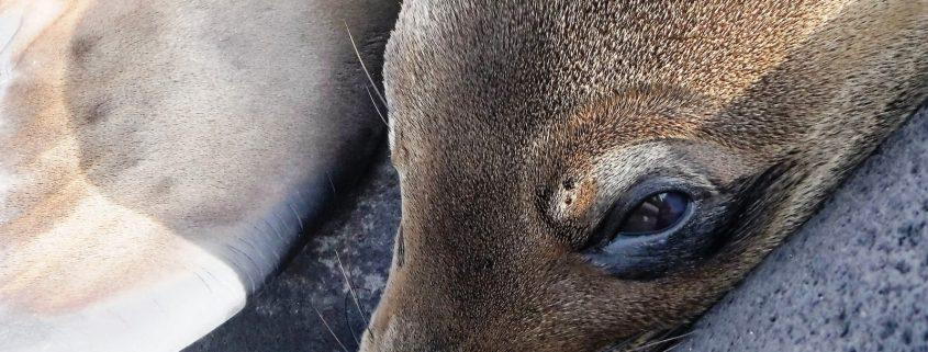 in pericolo gli animali delle Galapagos