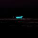 bioluminescenza naturale